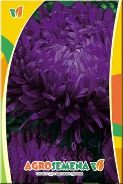 Астра Фиолетовая башня