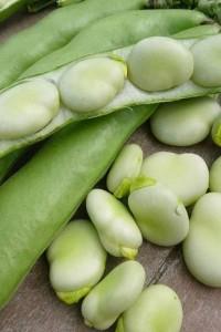 Бобы овощные Белорусские