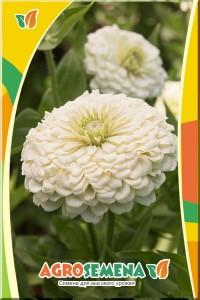 Цинния Крупноцветковая белая