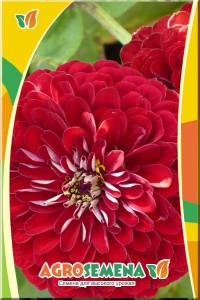 Цинния Крупноцветковая красная