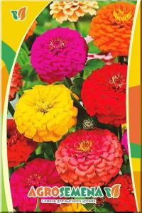 Цинния Крупноцветковая смесь окрасок