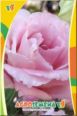 Эустома Эхо розовая
