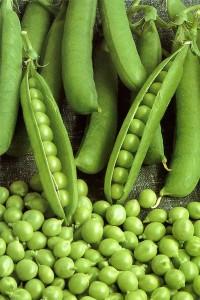 Горох Адагумский овощной