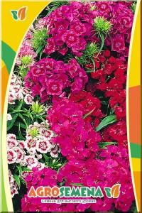 Гвоздика турецкая махровая Цветной узор