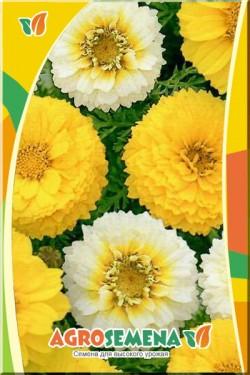 Хризантема Махровая смесь