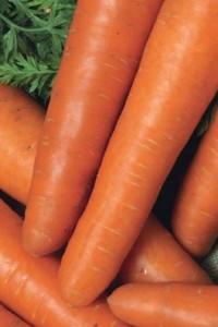 Морковь Кардинал F1 столовая