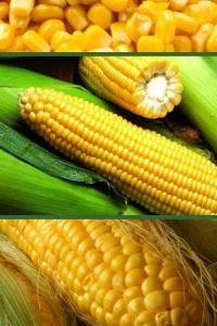 Кукуруза Лакомка