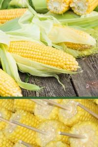 Кукуруза Ранняя лакомка 121