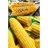 Кукуруза Сахарная Лакомка Белогорья
