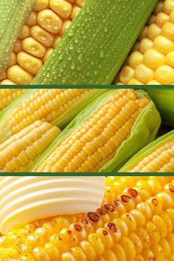 Кукуруза Сладкоежка