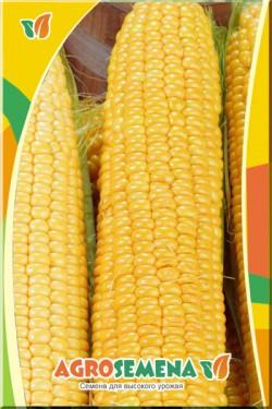 Кукуруза Станичник Сахарная