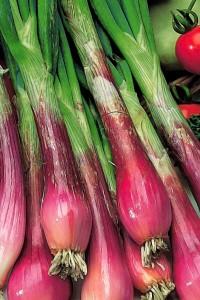 Лук репчатый Красный салатный