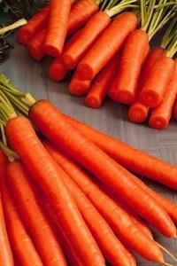 Морковь Амстердамская 5 гр