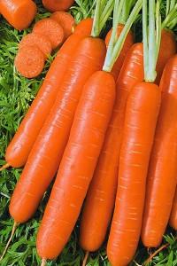 Морковь Амстердамская 50 грамм