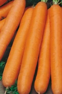 Морковь Чемпион F1