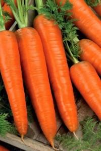 Морковь Длинная Красная 20 гр