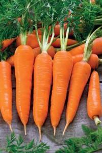 Морковь Флаккер