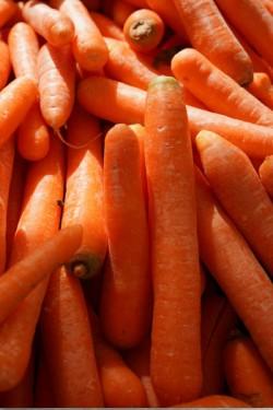Морковь Голландка столовая