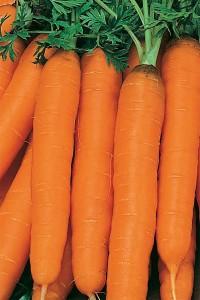Морковь Юлиана F1