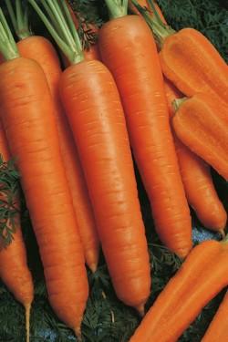 Морковь Красная боярыня 5 грамм