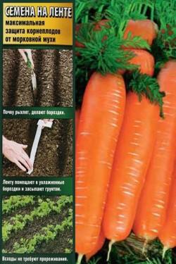 Морковь на ленте Малика 8 м