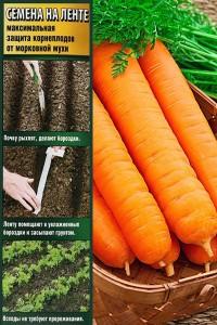 Морковь на ленте Самсон  6 м