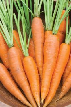 Морковь Наника