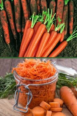Морковь Нантская 4, 4,0 г