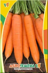 Морковь Принцесса