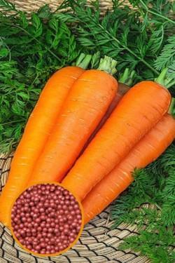 Морковь Роте Ризен в гранулах 300 шт