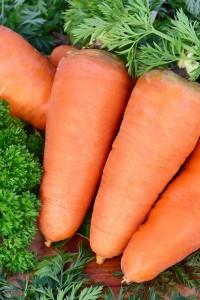 Морковь Шантанэ Роял 4 гр
