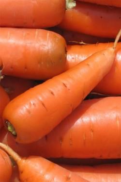 Морковь Шантене 2461