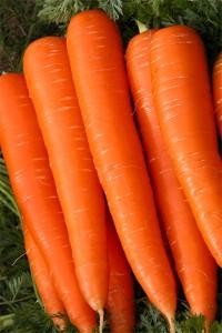 Морковь Витаминная 6