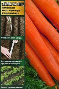 Морковь на ленте Витаминная 6  8 м