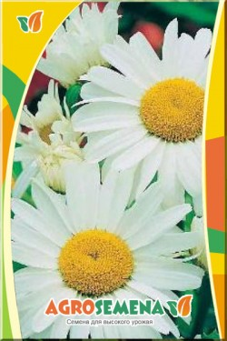 Нивяник крупноцветковый Гигант
