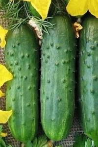 Огурец Длинный Зеленый