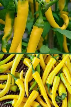 Перец Феферона желтая острый