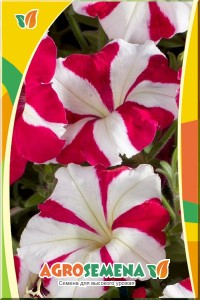 Петуния Карпет Роуз Стар F1 многоцветковая