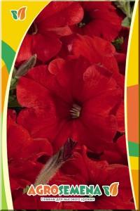 Петуния Сильвия F1 многоцветковая