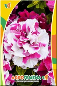 Петуния Дуо Розово-Белая F1 многоцветковая