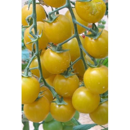 индийский купить томаты: умелец подхалим желтая карамель топ-модель серафино вакансий Усмани