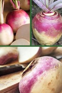 Репа Пурпурная