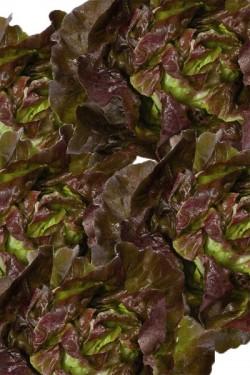 Салат Американский коричневый листовой