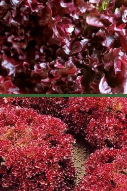 Салат Гранатовый сад