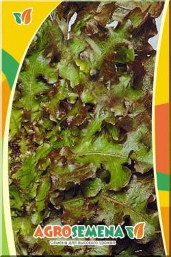 Салат Ред Боул листовой