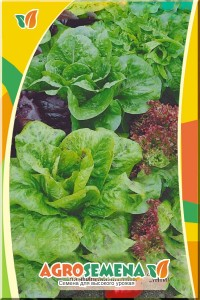 Салат Смесь салатов