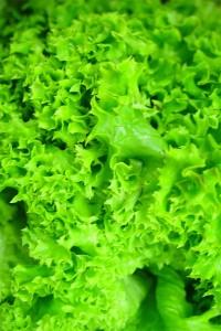 Салат Зайчик листовой