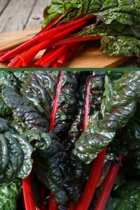 Мангольд Красный свекла листовая