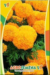 Тагетес Апельсиновый рай