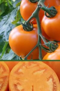 Томат Оранж-1  0,1гр